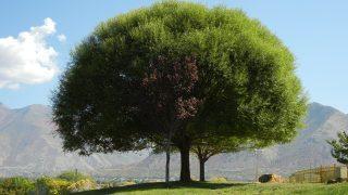 【世界樹の迷宮5~長き神話の果て~】発売間近!種族と職業をチェックしよう!~アースラン編~