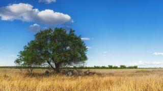 【世界樹の迷宮5~長き神話の果て~】発売間近!種族と職業をチェックしよう!~セリアン編~