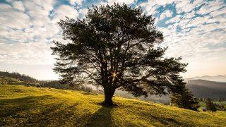 【世界樹の迷宮5~長き神話の果て~】発売間近!種族と職業をチェックしよう!~ルナリア編~