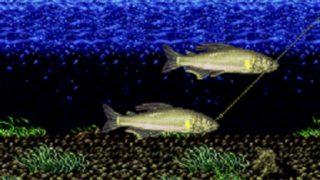 【スーファミ】川のぬし釣り2攻略&魚とぬしの場所マップ『しろのレトロゲーブログ』
