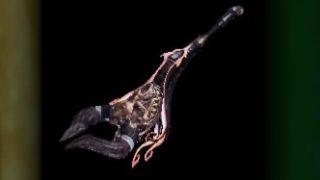 【MHWアイスボーン】属性攻撃・属性防御サポートならお任せ!ネロミェール狩猟笛・ヒュドロスホルンを作成『しろのモンハンワールドブログ』